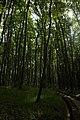 Лісовий заказник Чортові скелі.jpg