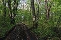 Пам'ятка природи Руда. Насадження дуба червоного. Самчиківське л-во (кв.30, вид.7). 13.05.2019 2.jpg
