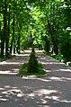Парк Берёзовая роща в Киеве. Фото 6.jpg