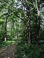 Парк Глібова, Веселий Поділ, 10.jpg