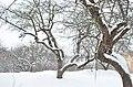 Парк Заріччя у Хмельницькому. Фото 10.jpg