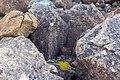 Полярный Урал, растения меж камней.jpg