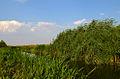 Река Мочурица.jpg