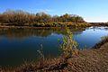 Река Урал вверх по течению - panoramio (2).jpg