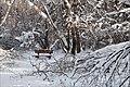 Скамейка из зоны спокойствия. Битца - panoramio.jpg