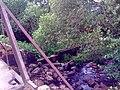 Спирово. Малая Тигма. Шлюз. Вид с моста. - panoramio.jpg