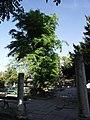 Стародавнє місто Херсонес-Таврійський 10.JPG