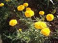 Цветы на грядке.jpg