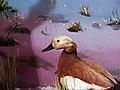 حیوانات تاکسی درمی شده - موزه تاریخ طبیعی شهر قم 12.jpg