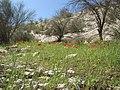 دانه دان. آب انبار اولی.گلهای شقایق - panoramio.jpg