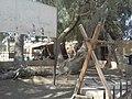 شجرة السيدة العزراء مريم بالبهنسا.jpg