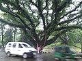 সি আর বি হিল সাত রাস্তার মোড়.jpg