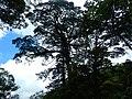 拉拉山 La La Mountain - panoramio.jpg