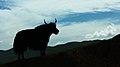 热尔大坝草原Rerdaba grassland - panoramio (29).jpg