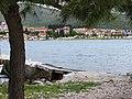 特羅吉爾 Trogir - panoramio - lienyuan lee.jpg