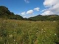 百花盛开 - Flowers in Bloom - 2012.08 - panoramio.jpg