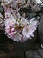 香川県善通寺市善通寺 - panoramio (1).jpg