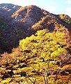 高の瀬峡 - panoramio - akiakane.jpg