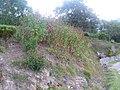 여름의 끝자락 - panoramio.jpg