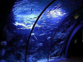 Civic Aquarium of Milan - Image: 00183 Acquario M Mar
