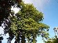 01300jfCapalangan Road Sulipan Apalit Pampanga Peter Shrine Calumpitfvf 08.JPG