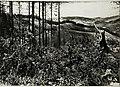 01915 Makowka; Blick auf eigene Stellung am Waldrand, Hintergrund Ostry..jpg