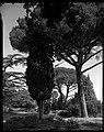 04.08.1964. Vue de la propriété. (1964) - 53Fi4723.jpg