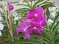 05593jfMidyear Orchid Exhibits Quezon Cityfvf 22.JPG