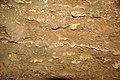 075 Limestone bdg. & nodules (app.) 4 (8317619474).jpg