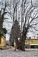 1000 year old linden tree, Hotel Lindenhof.jpg