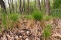 15-05-09-Biosphärenreservat-Schorfheide-Chorin-Totalreservat-Plagefenn-DSCF5559-RalfR.jpg
