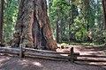 16 21 0075 redwood.jpg