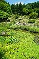 170811 Rokko Alpine Botanical Garden Kobe Japan13n.jpg