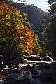 191123 Settsu-kyo Gorge Takatsuki Osaka pref Japan03s5.jpg