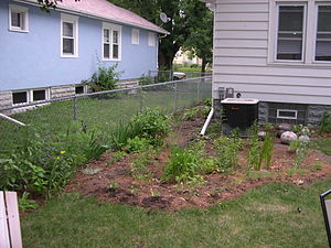 Rain garden - A home rain garden recently planted