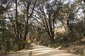 2010-09-19 Wombeyan Caves Road - 02.jpg