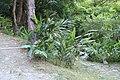 2010 07 17250 5834 Beinan Township, Taiwan, Jhihben National Forest Recreation Area, Walking paths, Plants.JPG