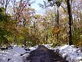 2011-10-30 11-View north along Runyon Mill Road near Mountain Road in East Amwell, Hunterdon County, New Jersey after 6 to 7 inches of snow fell the previous day during the 2011 Halloween nor'easter.jpg