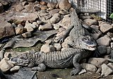 2011 China-Alligator 0491.JPG