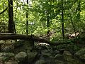 2013-05-12 11 43 30 Stream along the Hoeferlin Trail in Ramapo Mountain State Forest.JPG