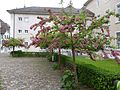 2014-05-12 Solothurn 29.jpg
