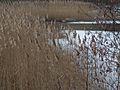 20150219 65 Wienerwaldsee (Large) (15962000283).jpg