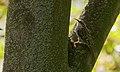 2016.09.28.-04-Vogelstangsee Mannheim--Gartenbaumlaeufer.jpg