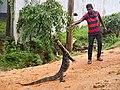 20160124 Sri Lanka 3719 sRGB (25770867695).jpg