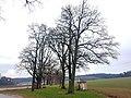 20201206 ND Klebinger Schlossallee Pleisk1.jpg