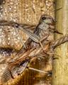 2021 03 14 Grasshopper 0289.png