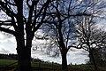 25.3.16 Delamere Forest 08 (25967793951).jpg