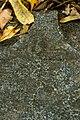 2870 Надгробный камень 3.JPG