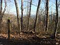 3.1 mile marker len foote hike inn trail amicalola falls ga - panoramio.jpg
