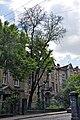 46-101-5038 Lviv Kotliarevskoho 15 Thorny Locust RB 18.jpg